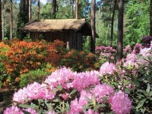 Rododendron garden
