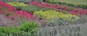 Žolynų diena VU Botanikos sodo VINGIO skyriuje